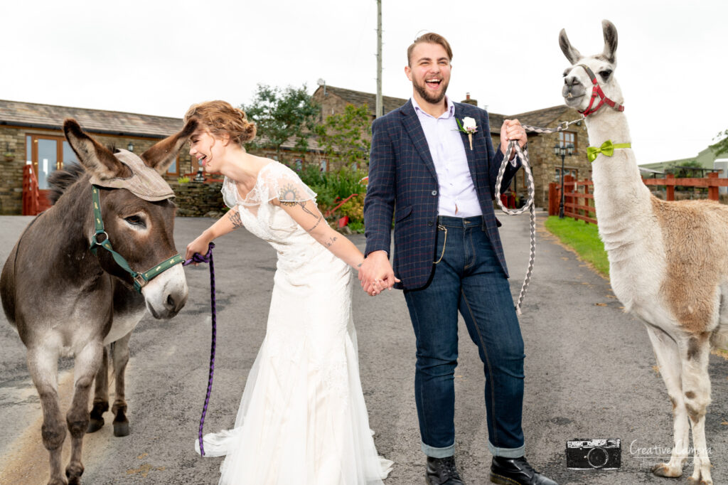 Bride and Groom with Llama and Donkey